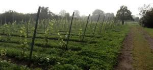 wijngaard-1